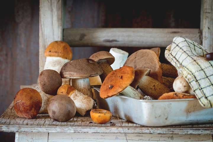 An image of a variety of mushrooms