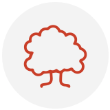 Outline of a tree in red - icon